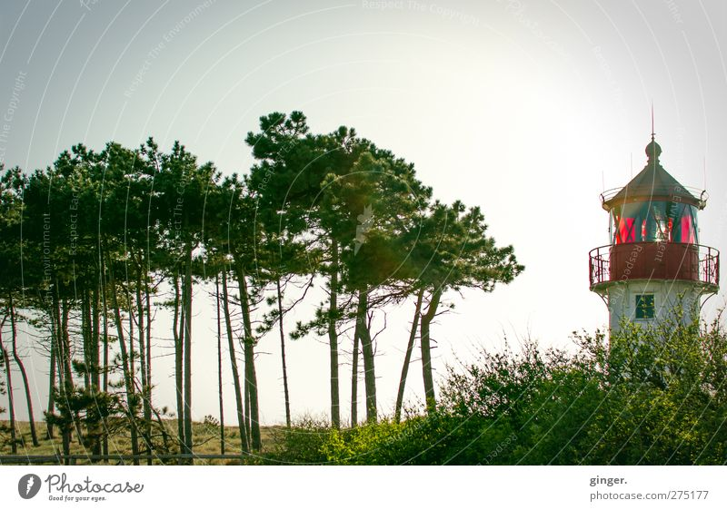Hiddensee. Hello, kid. Lighthouse Green Red Tree Accumulation Small Handrail Tower Beach Lookout tower Coniferous trees Exterior shot Deserted Day Twilight