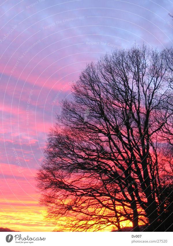 Beautiful Sky Sun Branch