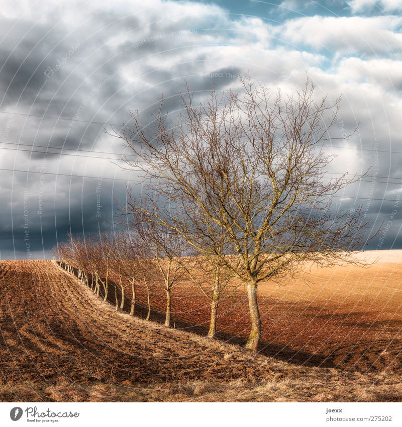 one at a time Nature Landscape Sky Clouds Horizon Autumn Weather Wind Tree Field Blue Brown Gray Black White Equal Idyll Calm Environment Row of trees