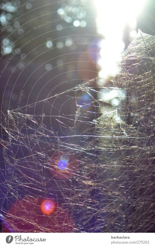 Nature Forest Line Natural Wild Esthetic Illuminate Bushes Network Uniqueness Bizarre Relationship Spider Spider's web