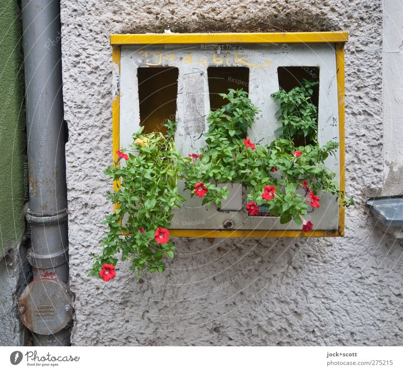 Flower - Automat Shopping Style flowers Berlin Wall (building) Facade Downpipe Gumball machine Stone Metal Blossoming hang Growth Exceptional Sharp-edged Firm