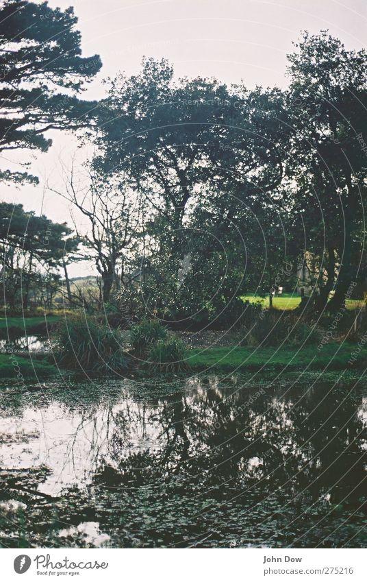 English bucolic Trip Adventure Sunlight Plant Tree Grass Bushes Garden Park Lakeside Pond Wild Loneliness Hope Horizon Idyll Transience Jinxed Overgrown England