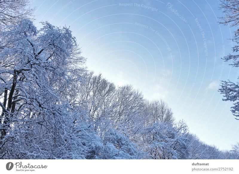 Sky Nature Blue Tree Relaxation Calm Forest Winter Mountain Cold Snow Above Hiking Ice Beautiful weather Fantastic