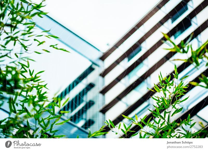 Plant Town Green Tree Leaf Background picture Architecture Style Business Garden Facade Office Modern Glass Company Ecological