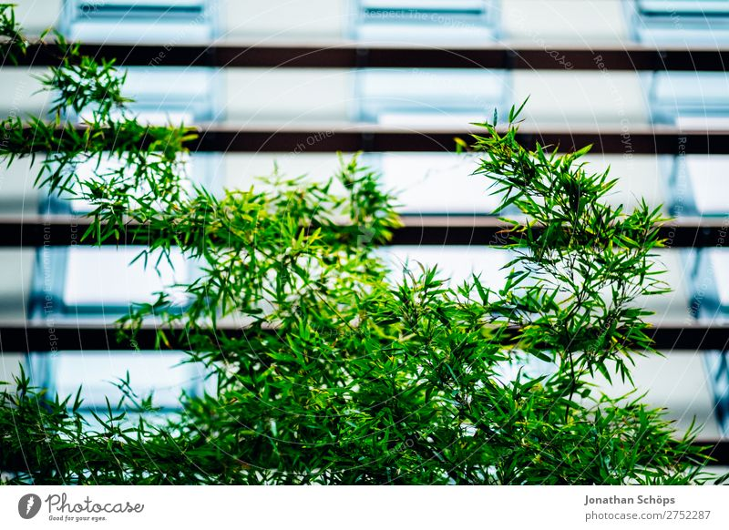 Plant Town Green Tree Leaf Background picture Architecture Style Business Garden Office Modern Glass Company Ecological Tasty