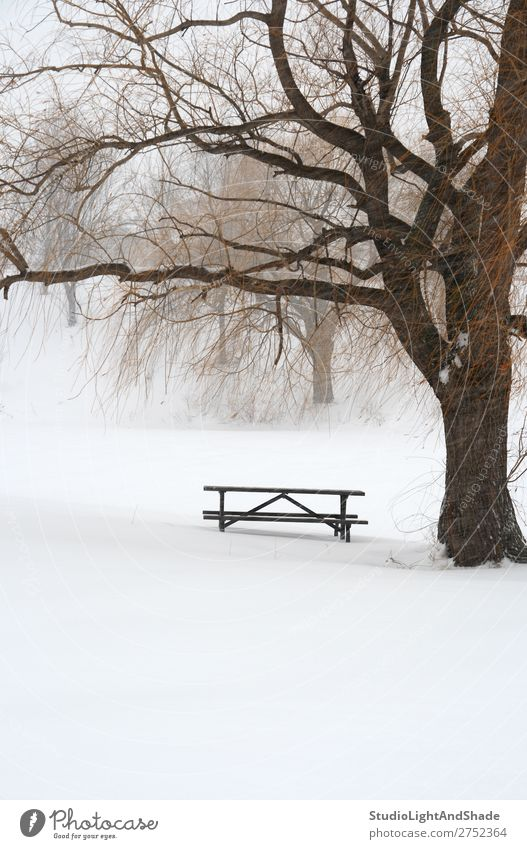 Picnic table in snow under a tree Nature Beautiful White Landscape Tree Loneliness Calm Winter Snow Snowfall Fog Weather Vantage point Gloomy Table Seasons