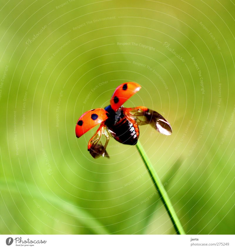 small freedom Environment Nature Plant Animal Spring Summer Wild animal 1 Flying Free Natural Spring fever Ladybird Departure Wing Colour photo Exterior shot