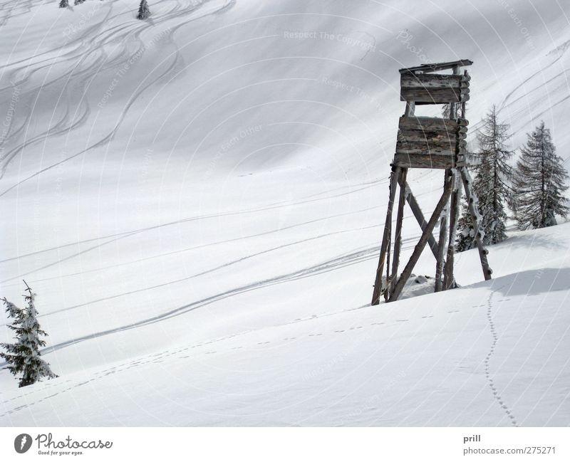 skiing in Wagrain Tourism Winter Mountain Sports Winter sports Ski run Landscape Hill Hunting Blind Fresh Cold White Idyll european alps alpine skiing Austria