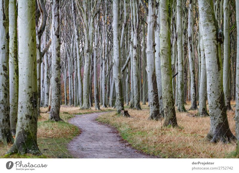 Ghost forest in Nienhagen XIII Central perspective Contrast Light Day Copy Space middle Copy Space bottom Copy Space left Copy Space right Copy Space top