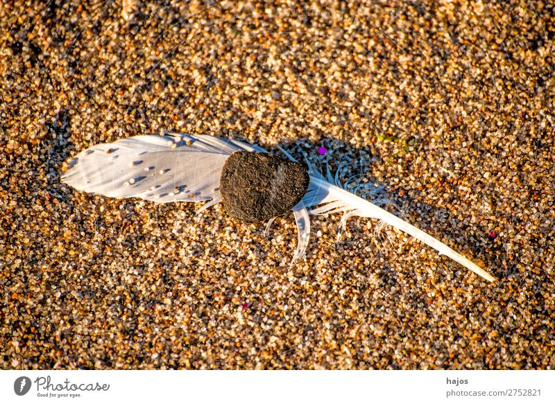 Feather on the beach Beach Nature Sand Bird Soft Brown White seagulls pebble Fluffy Fragile Close-up Copy Space Colour photo Exterior shot Deserted