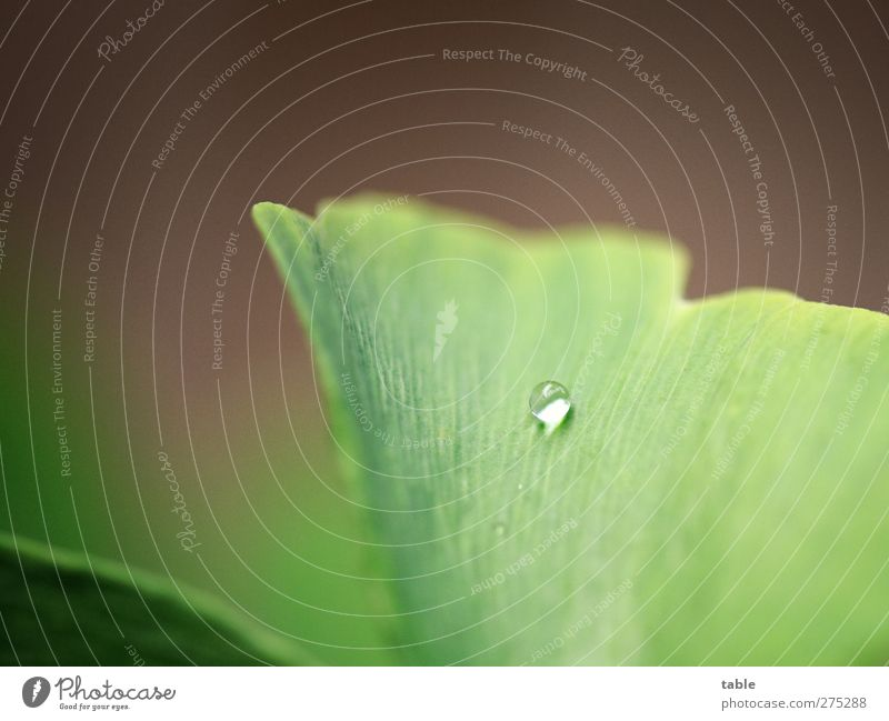 Nature Water Green Tree Plant Loneliness Leaf Calm Environment Rain Lie Glittering Growth Fresh Illuminate Drops of water