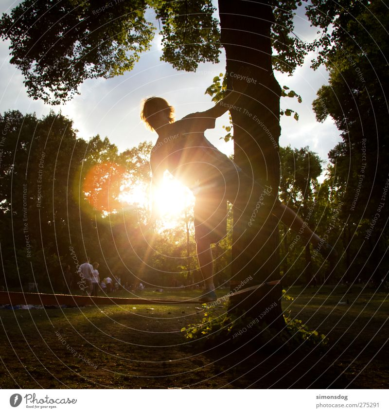 berlin slacking Leisure and hobbies Sports Human being Young man Youth (Young adults) Life 1 Nature Summer Sun Tree Park Meadow Illuminate Calm Ease slackliner
