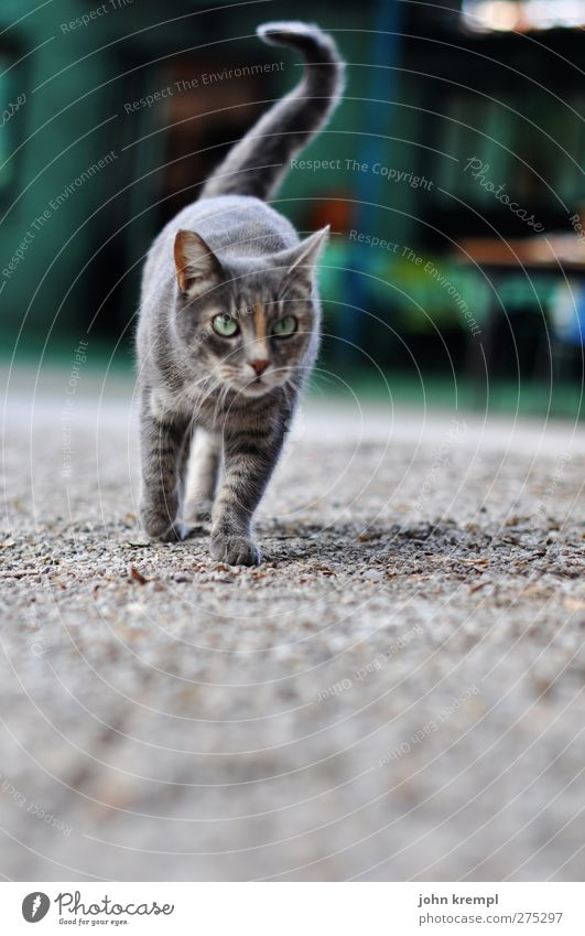 my first, only and last cat picture Pet Cat Farm 1 Animal Observe Cuddly Gray Green Elegant Hunting Gravel Creep Colour photo Exterior shot Deserted