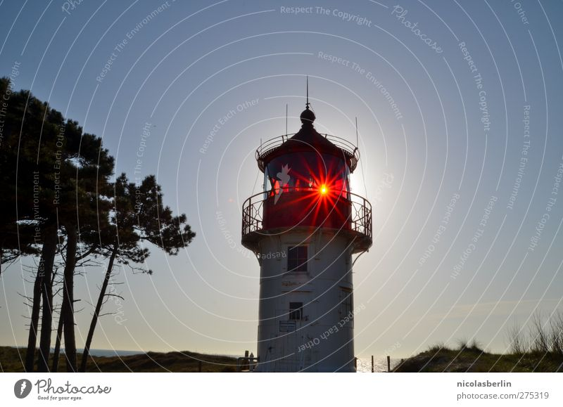 Hiddensee Shine On Old Boy Lighthouse Manmade structures Building Architecture Illuminate Elegant Safety Tree Colour photo Exterior shot Copy Space right