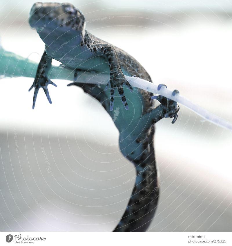 Animal Discover Hang Frog Newt Leopard print