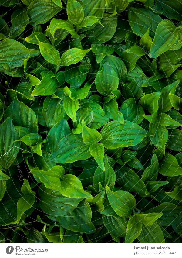 green leaves texture Nature Summer Plant Green Leaf Winter Autumn Garden Decoration Fresh Beauty Photography Consistency Floral