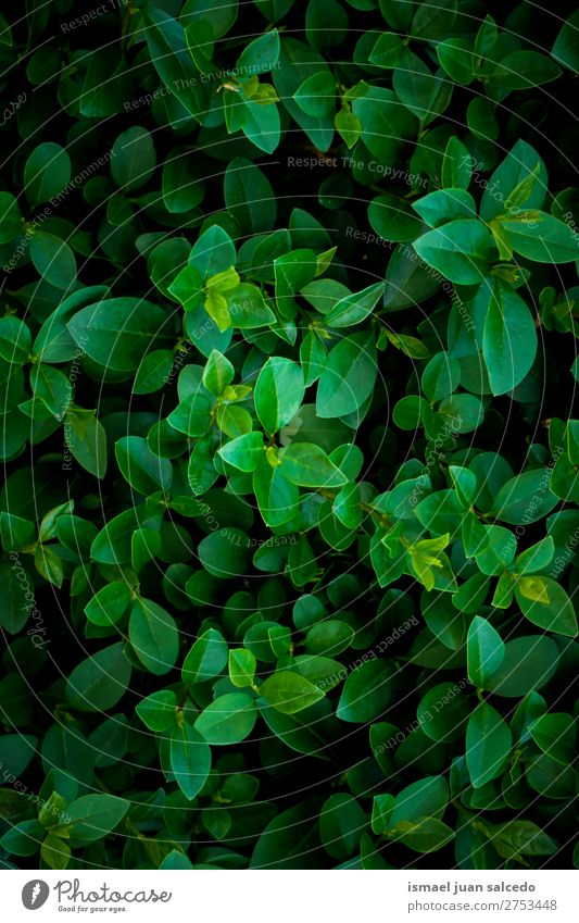 green leaves texture Plant Leaf Green Garden Floral Nature Decoration Abstract Consistency Fresh Exterior shot background Beauty Photography fragility spring