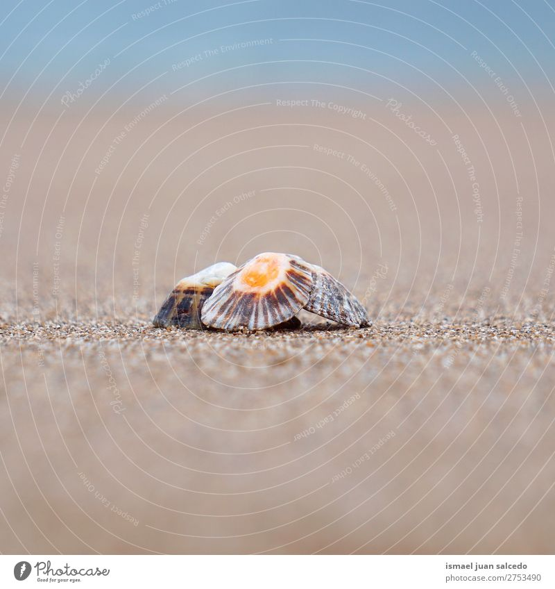 shell on the sand Shell Beach Sand Rock Ocean Waves water Coast Exterior shot Vacation & Travel Destination Places Nature Landscape background Calm Serene