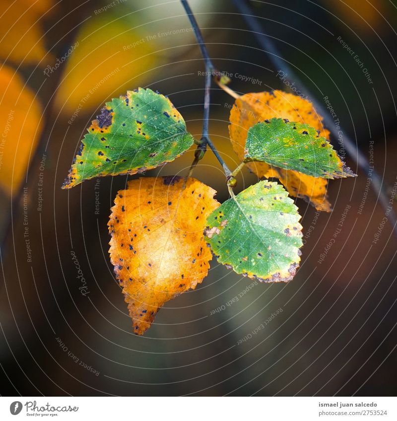 green yellow leaves Nature Green Leaf Winter Autumn Beauty Photography Consistency