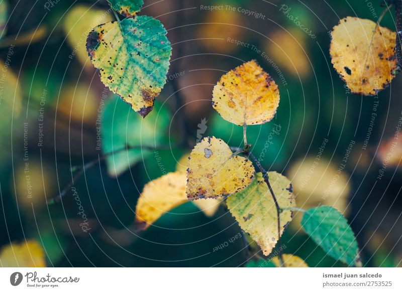 green yellow leaves Leaf Green Nature Abstract Consistency Exterior shot background Beauty Photography fragility Autumn fall Winter Yellow