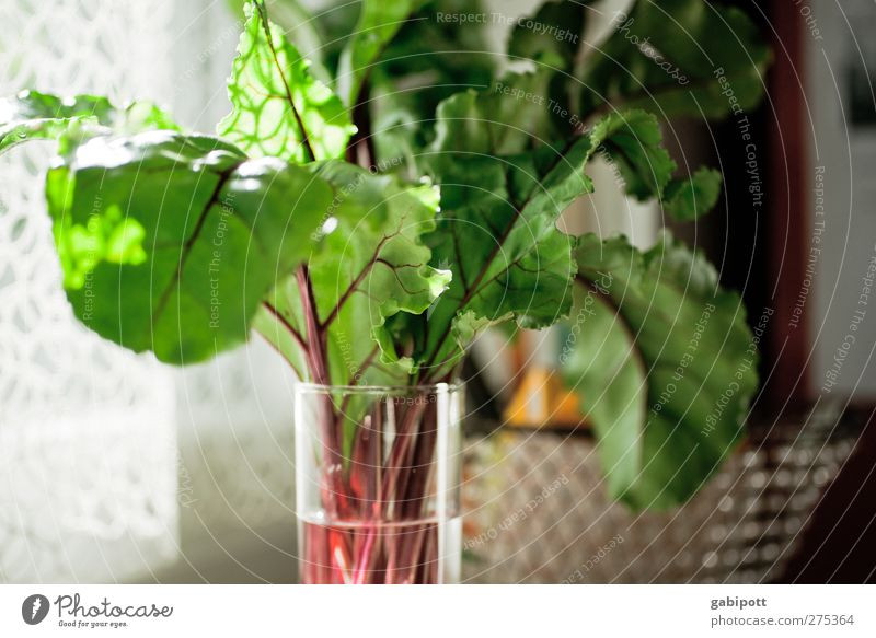 beetroot in glass Food Vegetable Nutrition Red beet Glass Nature Plant Leaf Exotic Friendliness Healthy Natural Juicy Green Happiness Joie de vivre (Vitality)