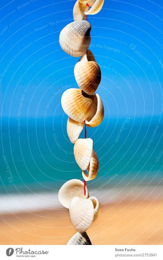 Mussels on a string in front of sky, sea and sandy beach Life Harmonious Relaxation Meditation Vacation & Travel Summer Beach Ocean Decoration Craft (trade)