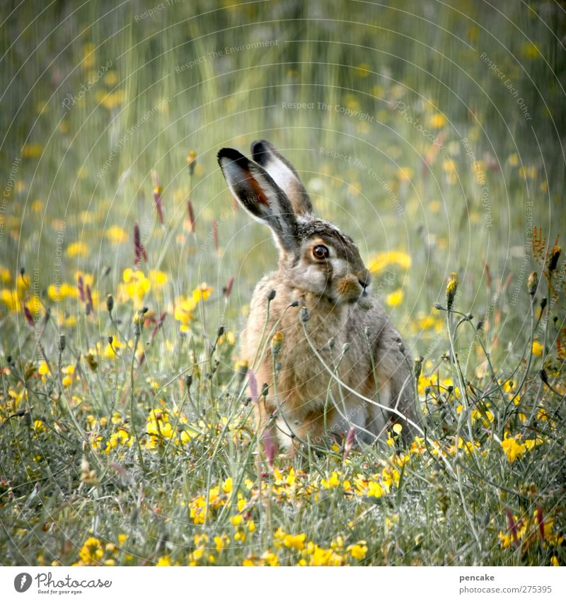 Battlehase   limfjorden Nature Plant Animal Summer Grass Wild animal 1 Authentic Famousness Free Friendliness Historic Beautiful Uniqueness Natural Speed Soft
