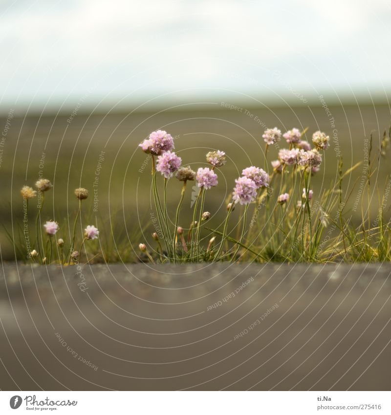 Nature White Green Summer Plant Landscape Environment Spring Coast Small Pink Tourism Beautiful weather Violet Blossoming North Sea
