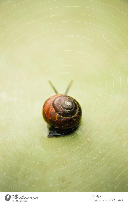 Loneliness Animal Movement Sadness Esthetic Longing Serene Goodbye Snail Patient Slowly Snail shell