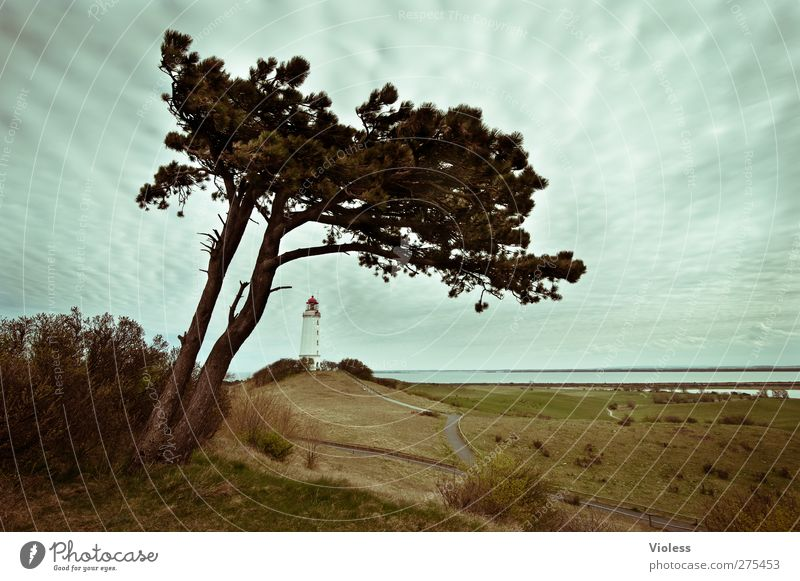 Hiddensee. Lost in..... Sky Clouds Tower Lighthouse Manmade structures Building Architecture Discover Pine Colour photo Exterior shot Wide angle