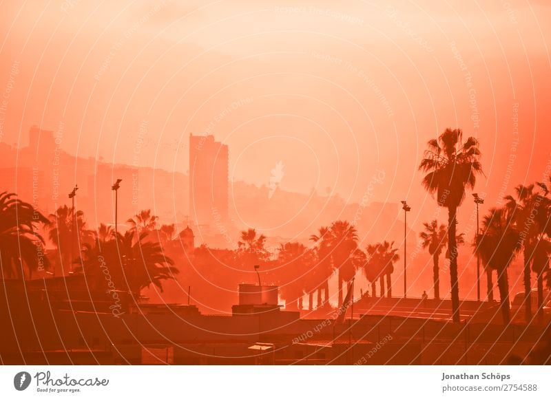 Town Pink Fog High-rise Palm tree Tenerife Coral Smog Color chart