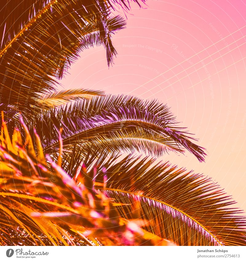 Palm in neon retro colours Style Beautiful Pink 2019 Color of the Year 2019 Color of the year colour trends Sky Coral Corsica Living Coral Color chart