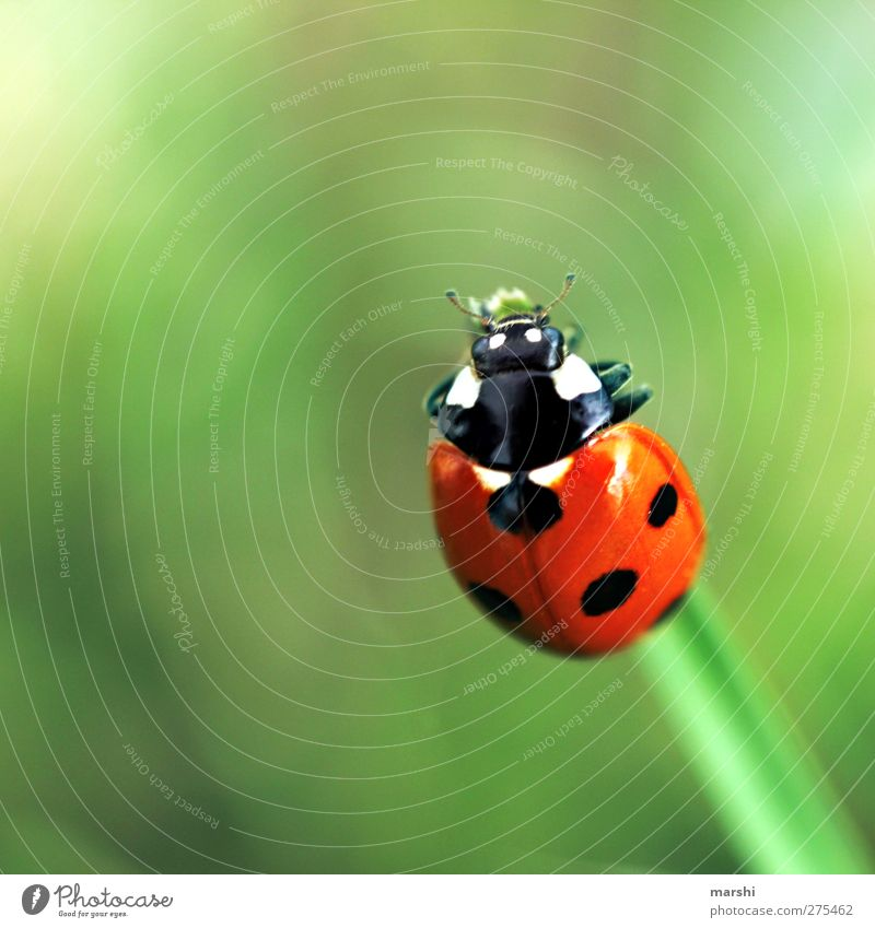 Green Red Plant Animal Black Happy Small Point Beetle Ladybird Good luck charm