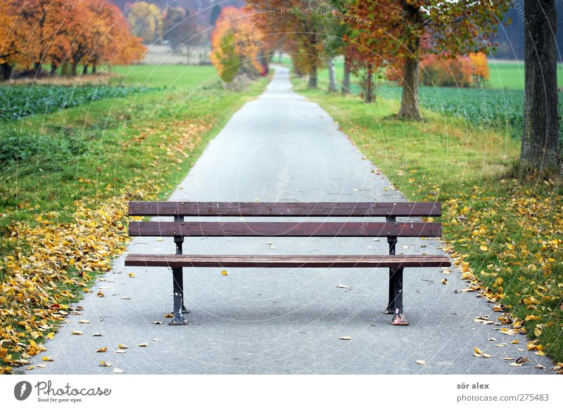 Nature Tree Plant Leaf Forest Landscape Environment Autumn Sadness Park Going To go for a walk Break 60 years and older 50 plus Footpath