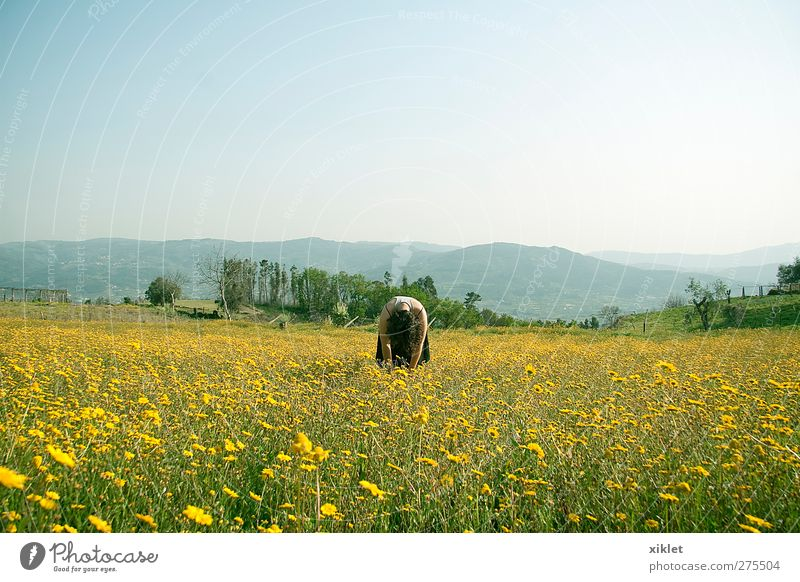 daisies Nature Green Tree Flower Joy Leaf Relaxation Yellow Spring Freedom Young woman Healthy Lie Field Wind Meditative