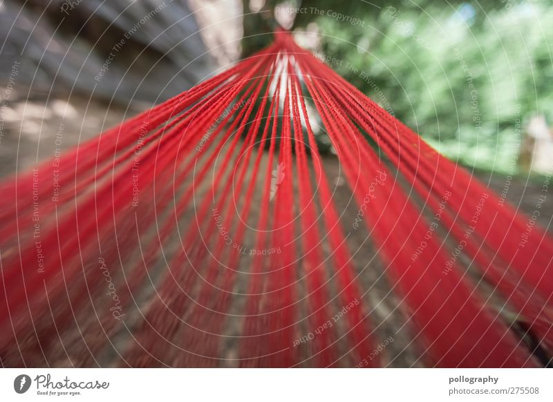 all paths lead to.... Summer Plant Tree Park Forest Green Red Hammock Line Rope String Earth Bound Attach Perspective Vanishing point Colour photo
