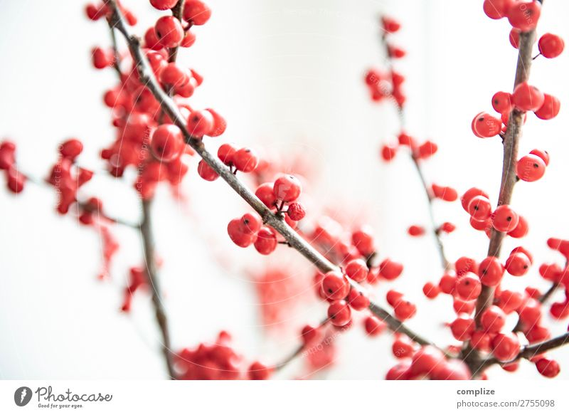 Ilex branches | Christmas decoration Lifestyle Style Design Living or residing Flat (apartment) Interior design Feasts & Celebrations Christmas & Advent Nature