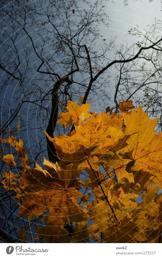 Sky Nature Blue Tree Plant Leaf Black Landscape Yellow Environment Autumn Wood Air Orange Weather Climate