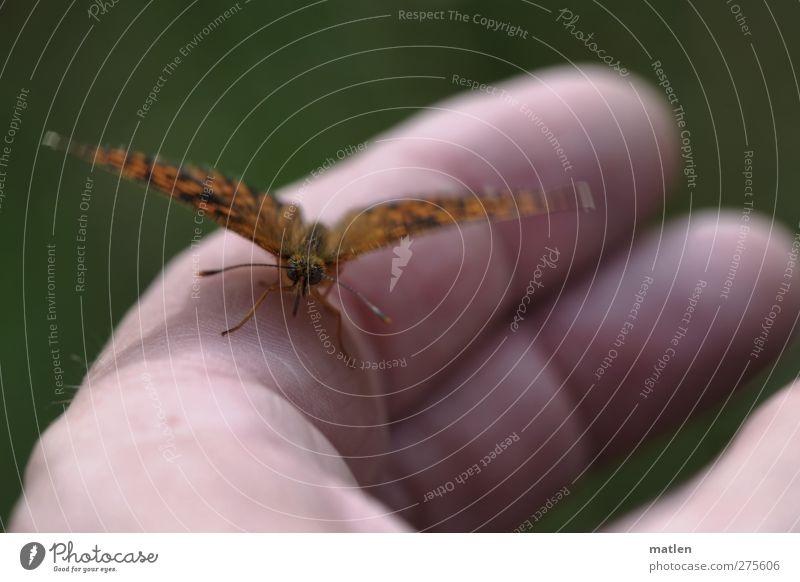 Human being Green Hand Animal Brown Wild animal Fingers Break Observe Touch Near Butterfly Ease