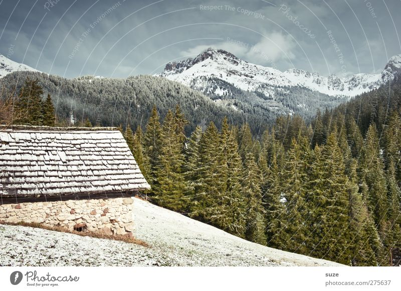 Sky Nature Plant House (Residential Structure) Forest Landscape Environment Meadow Cold Mountain Snow Spring Climate Authentic Living or residing Elements
