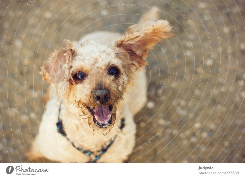 Dog Summer Joy Animal Environment Life Autumn Playing Emotions Happy Small Moody Brown Blonde Leisure and hobbies Dirty