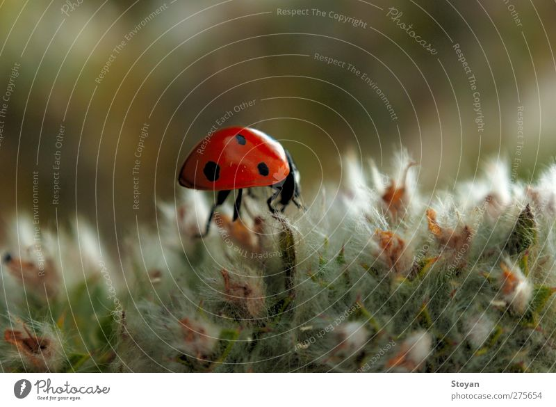 ladybug Nature Plant Green Beautiful White Leaf Animal Forest Black Blossom Meadow Happy Garden Flying Brown Orange