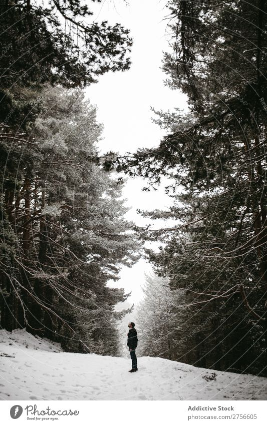 Tourist standing in snowy forest Man backpacker Street Stand Winter Forest Nature Snow Cold Frost Seasons Landscape White Beautiful Rural Frozen