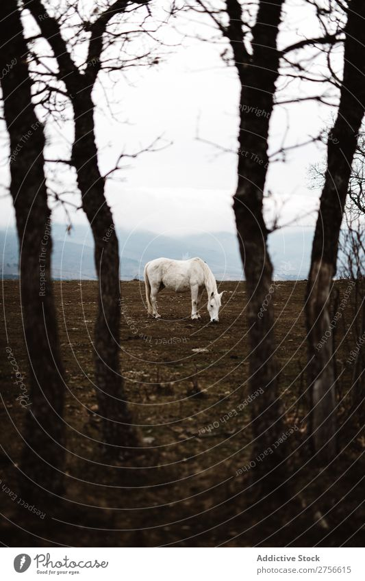 White horse in hillside Horse Nature Stand Fog Ground stallion equine Freedom Mane Farm Power Wild Beast Mammal Strong Gray Silver Beautiful Animal hoofed