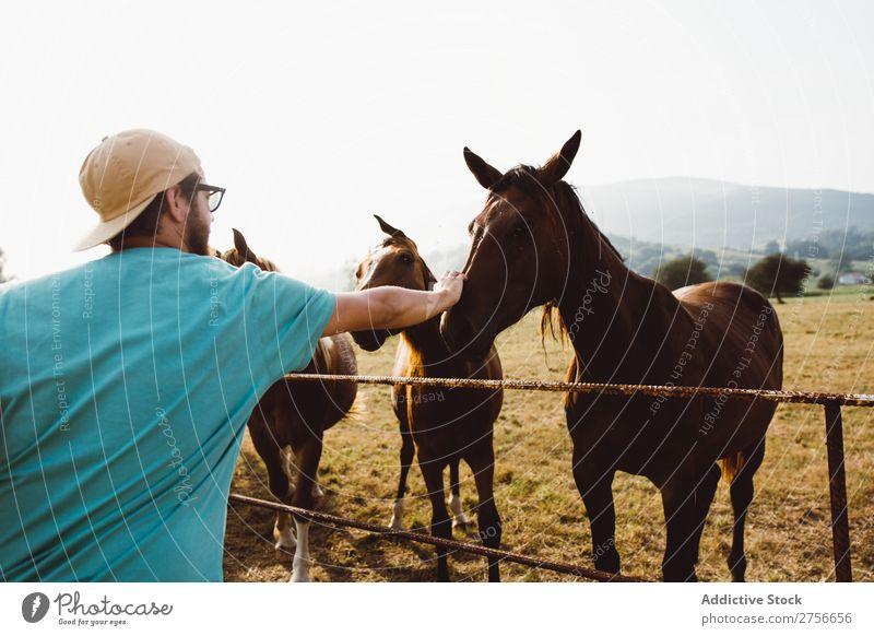 Man feeding horses Horse Herd Fence Landscape Farm Nature stallion Rural Field Animal Pasture Ranch Grass Mammal Brown Domestic equestrian equine Sunbeam