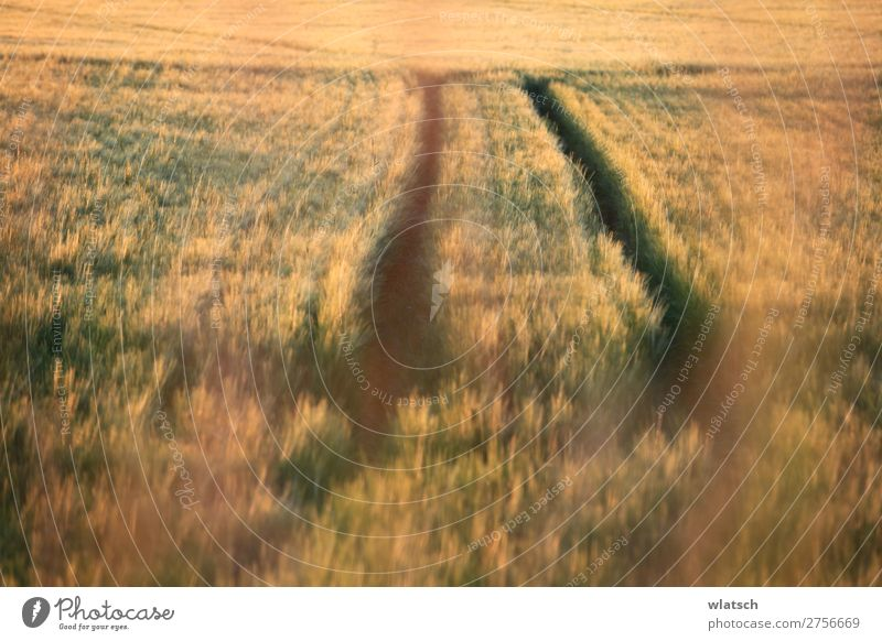 Nature Summer Landscape Food Autumn Environment Meadow Work and employment Field Beautiful weather Blossoming Agriculture Forestry