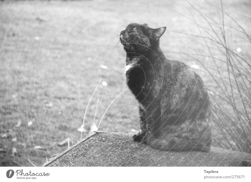 cat Cat 1 Animal Wood Happy Adventure Contentment Black & white photo Exterior shot Close-up Day Closed eyes