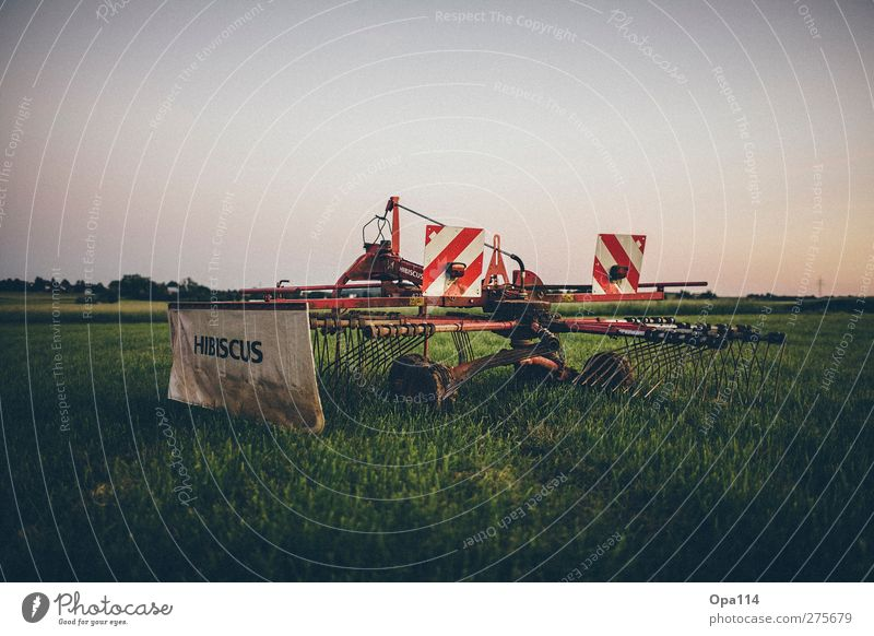 Nature Blue Green Summer Red Plant Animal Landscape Environment Meadow Field Wait Beautiful weather Agricultural crop