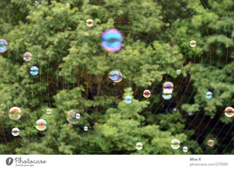 Tree Air Flying Many Round Soap bubble