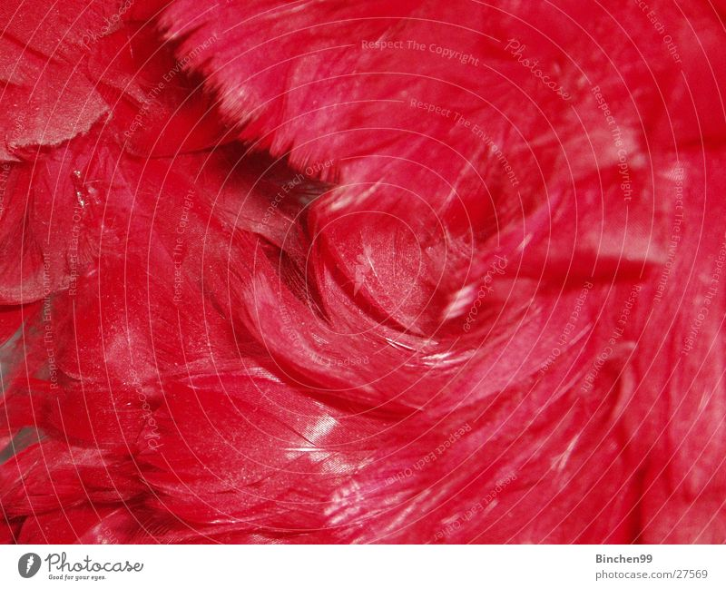 pile of feathers Red Heap Background picture Soft Macro (Extreme close-up) Close-up springs
